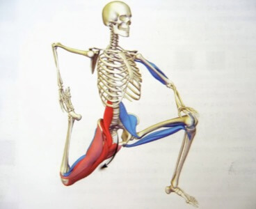 Hip Mobility and Lower Back Pain Recover with Sydney Sports and Exercise Physiology